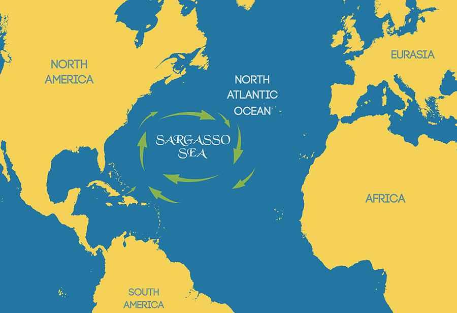 Где расположено Саргассово море