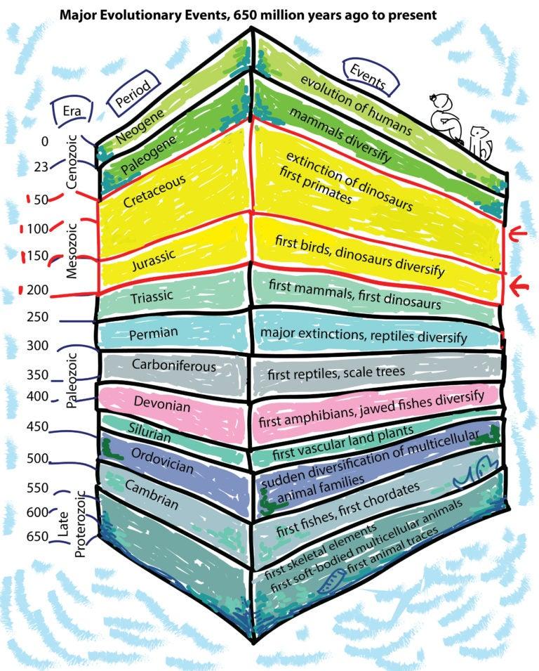 Кратко об истории развития Земли. Животные и растения Триасового периода.