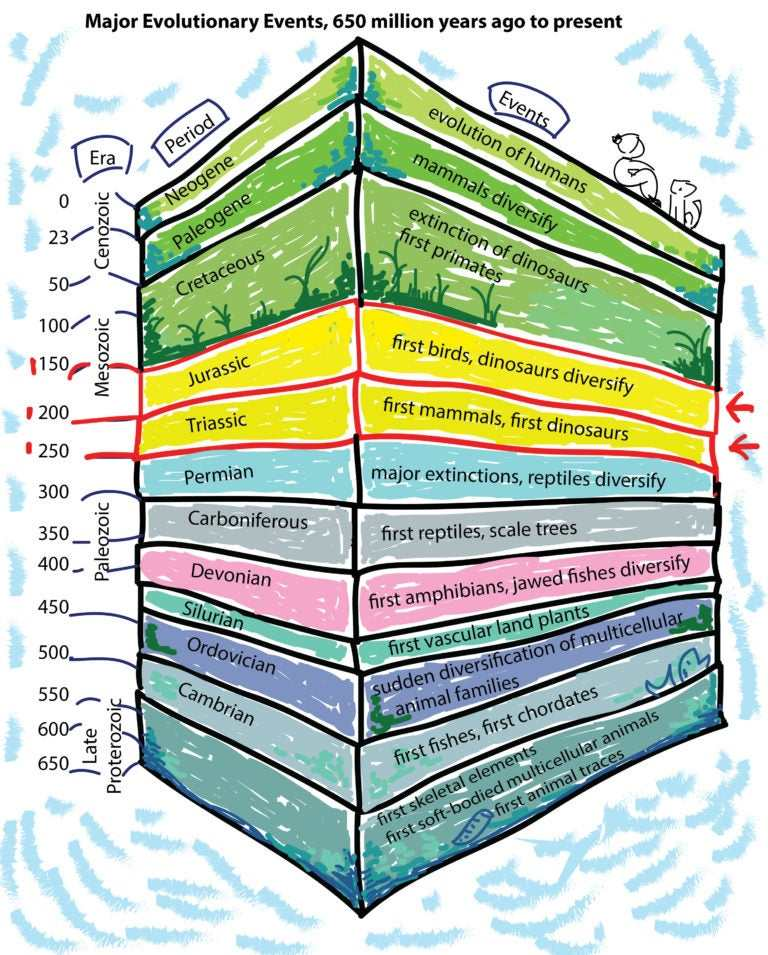 Кратко об истории развития Земли. Жизнь в Триасе