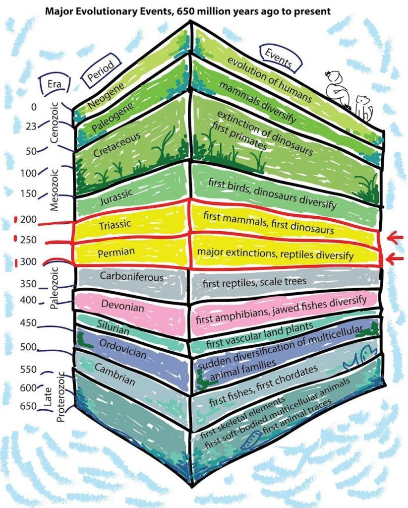 Кратко об истории развития Земли. Великое пермско-триасовое вымирание