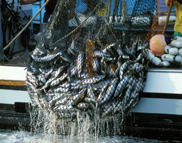 Вылов рыбы неводом