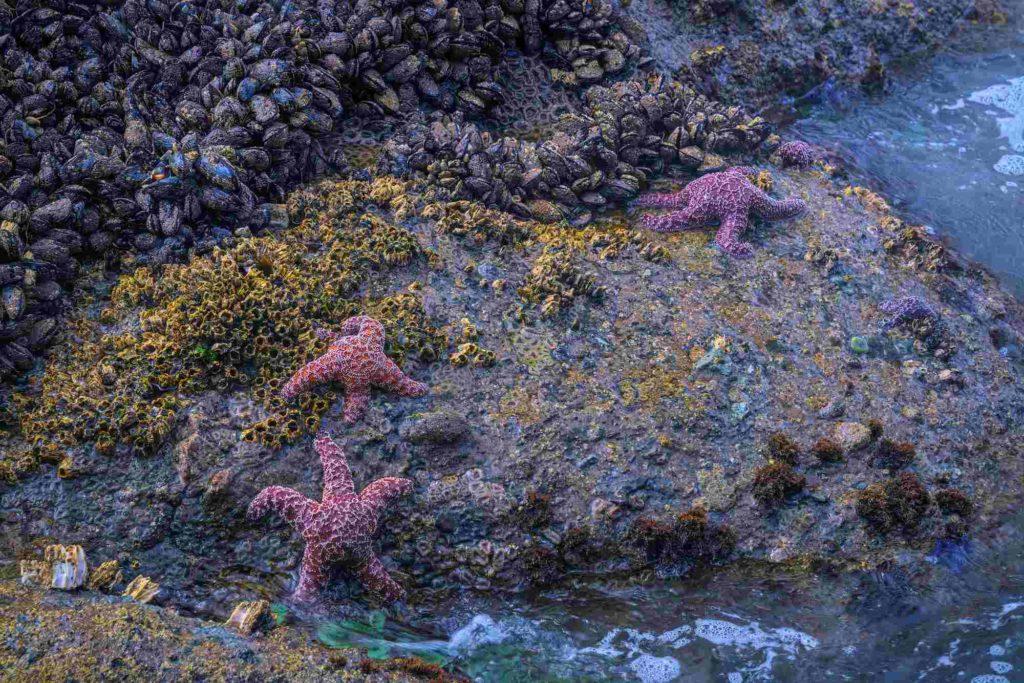 Морские звезды и двустворчатые моллюски