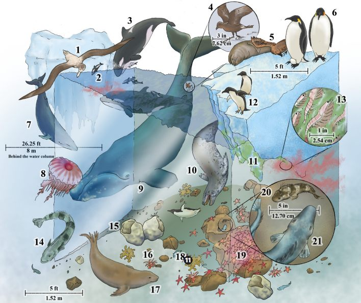 Обитатели полярных морей