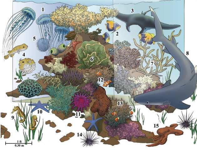 Обитатели тихоокеанских коралловых рифов