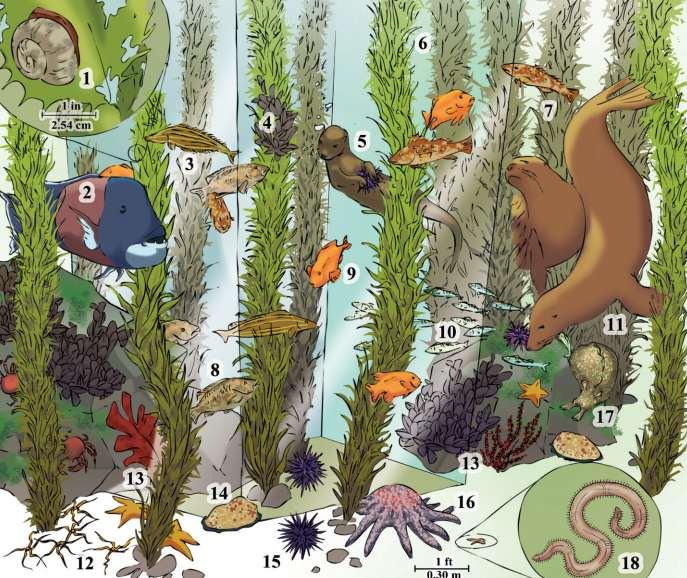 Обитатели водорослевых зарослей