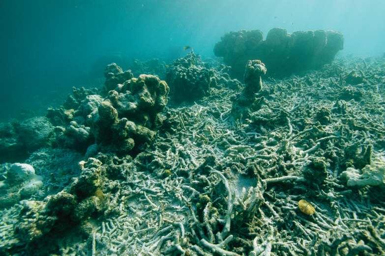 Мертвый коралловый риф