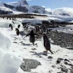 Пингвины на пляже в Антарктиде