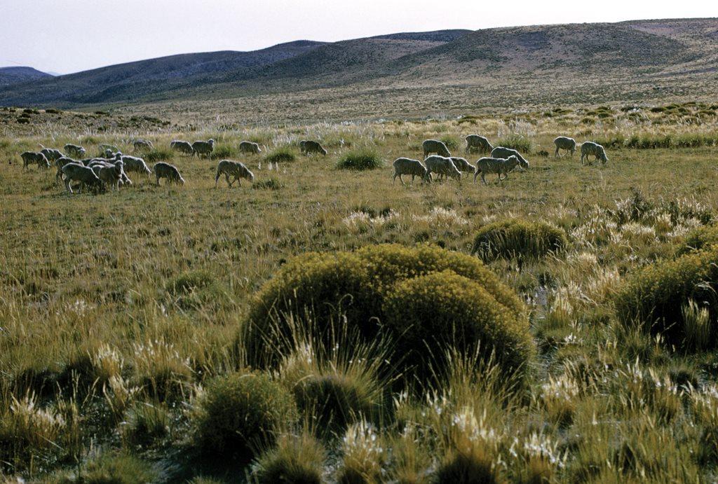 Пампасы Аргентина
