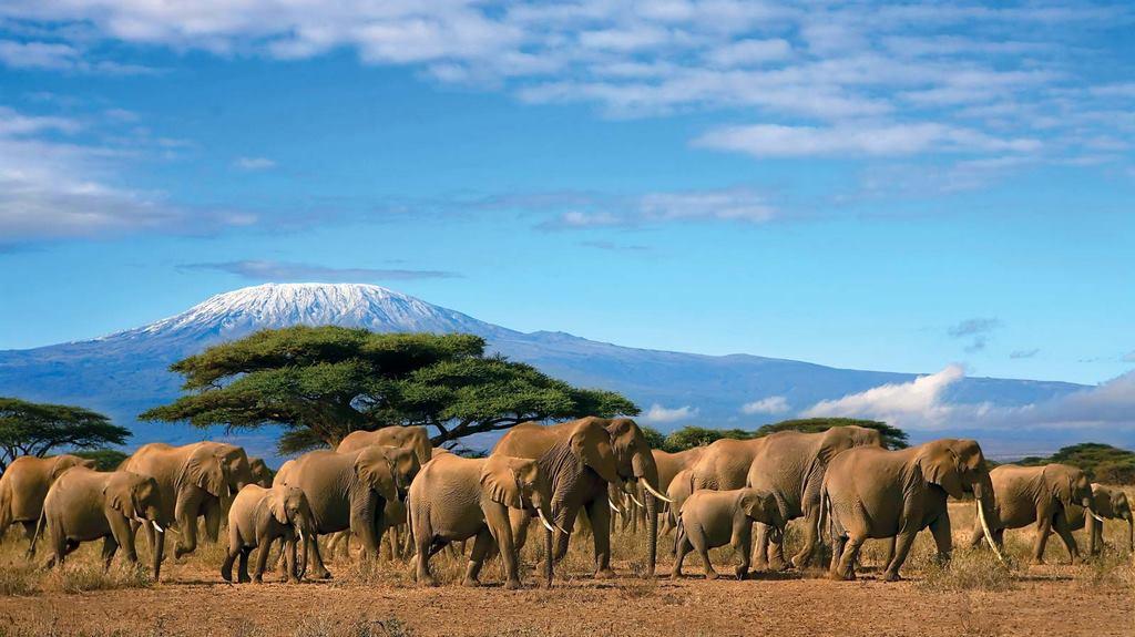 У подножия горы Килиманджаро