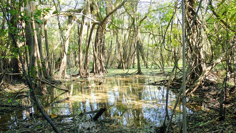 Амазонсая сельва. Перу