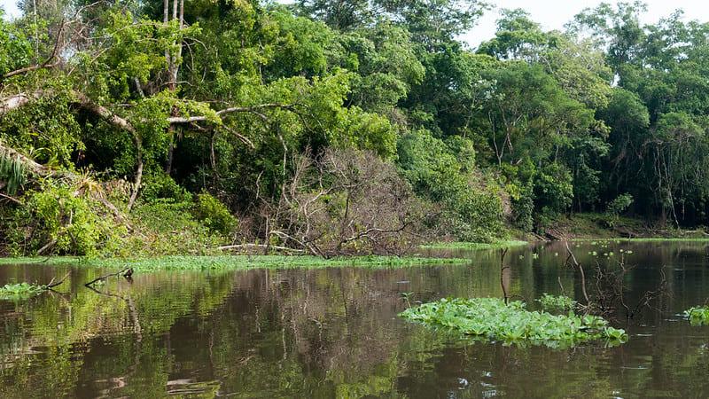 Берег Амазонки